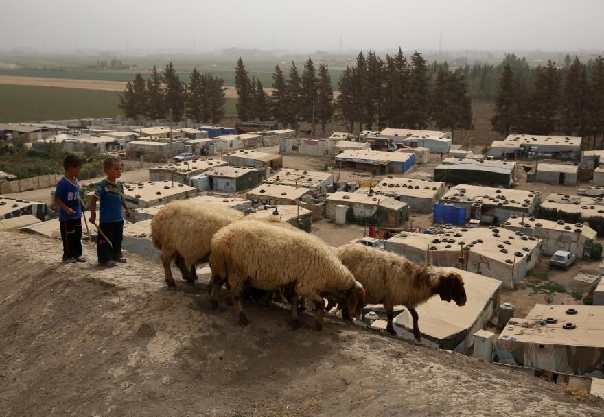 Syrian boys herd sheep near a refugee camp in Lebanon's Bekaa Valley.