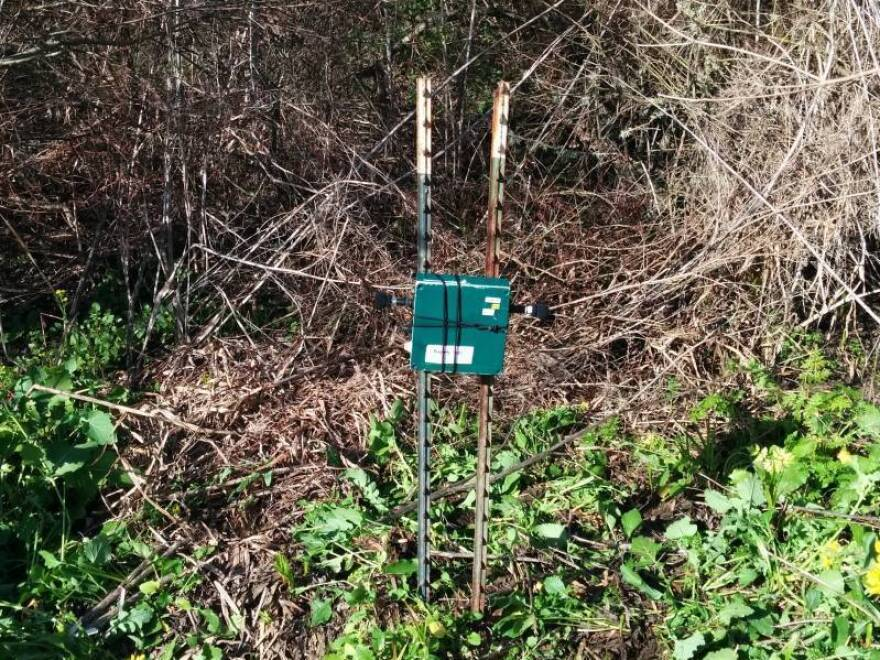 Conservation Metrics uses song meters to record red-legged frog calls.
