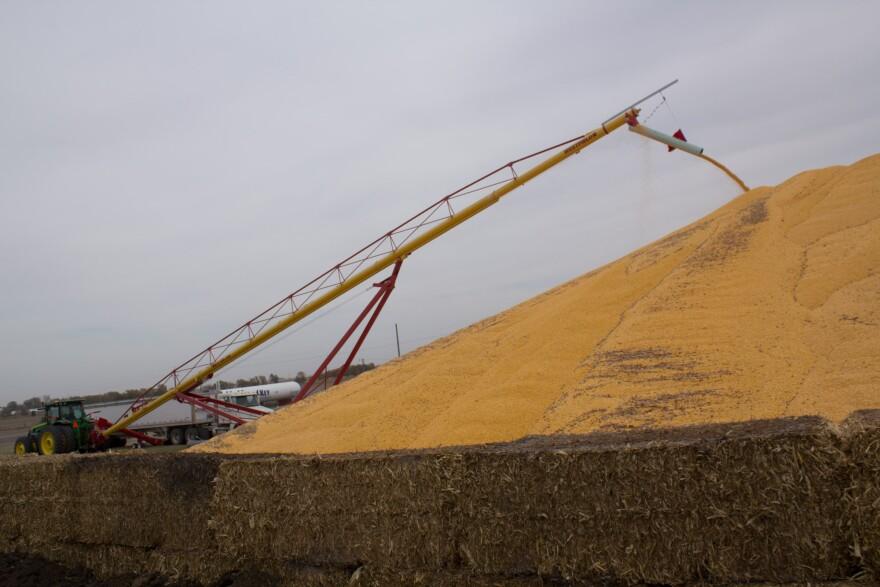 Harvest-Corn-at-Key_0.jpg
