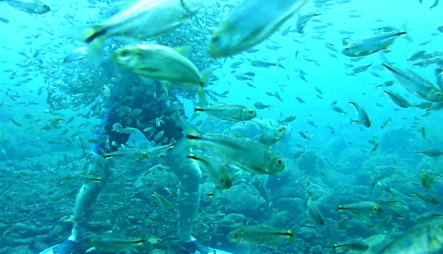 diver_fish.png