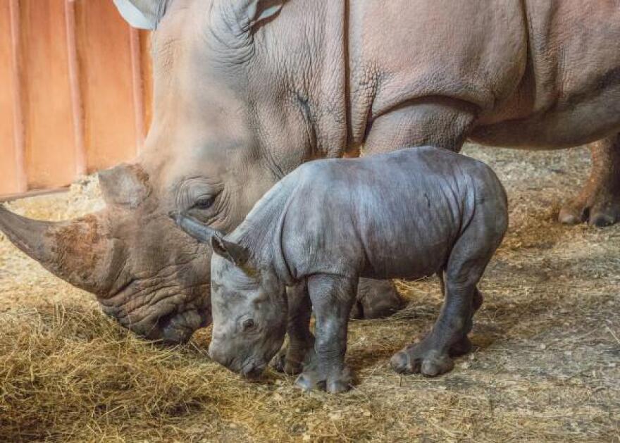 RhinoBaby_Mguu.jpg