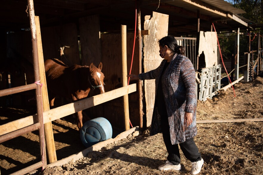 Cecilia Del Toro Garcia extends a hand to the horse in her backyard as she walks past them.