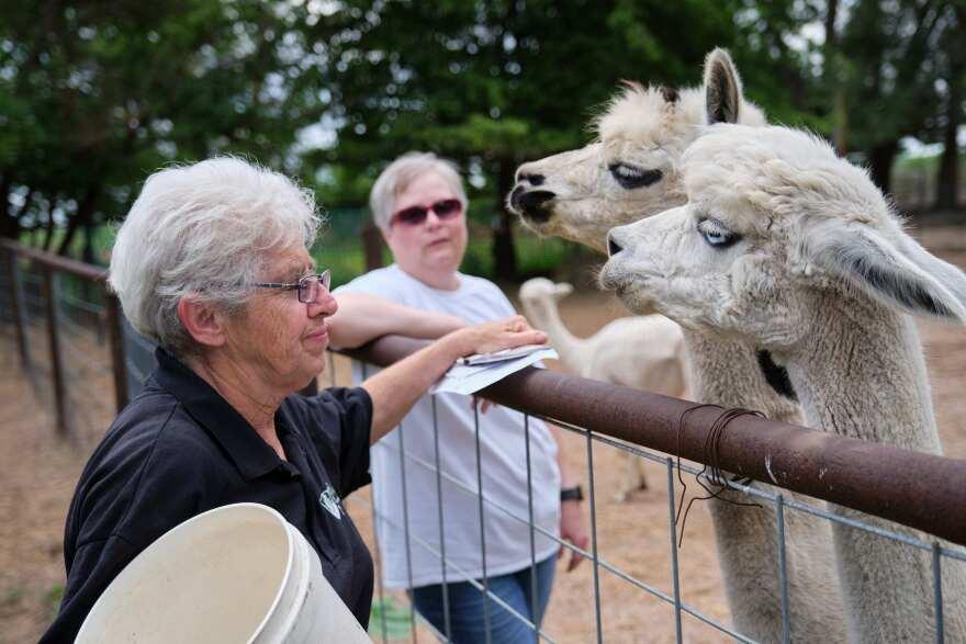 Heartland Farm Alpacas