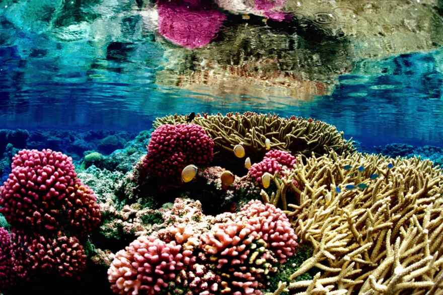 Chemicals common in many sunscreens have been found to harm corals.