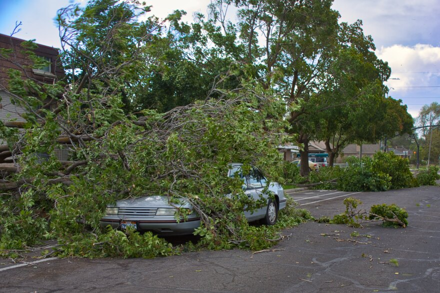 Photo of a car with a downed tree laying on top of it.