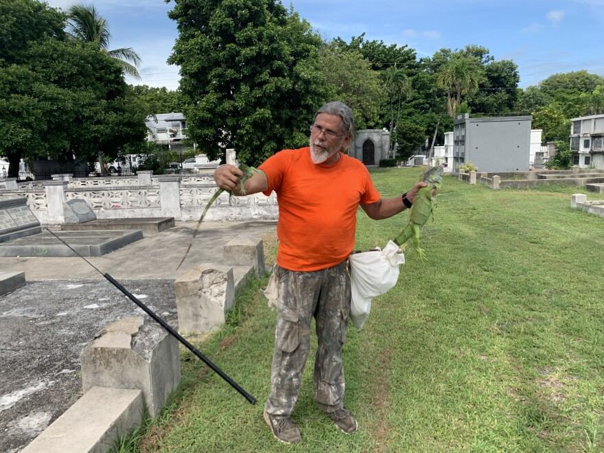 Manny Hernandez estimates his team has removed about 3,000 iguanas from the Key West Cemetery.