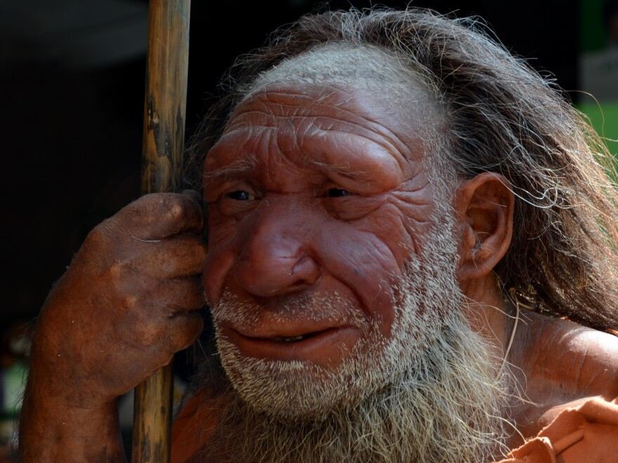 A reconstruction of a Neanderthal man stands at the Neanderthal Museum in Mettmann, Germany.