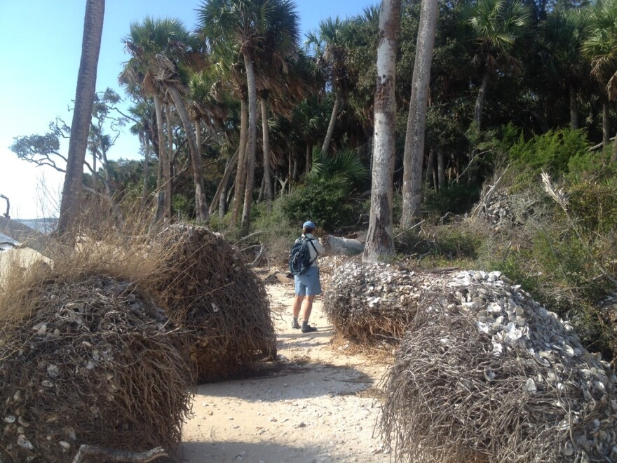 Man walks along beach. Giant tree roots are to the right and left of him.