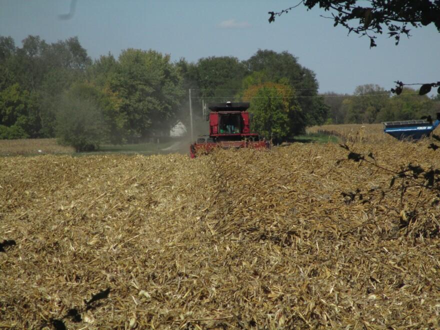 Harvest derecho corn_Polk Co_10.04.20.JPG