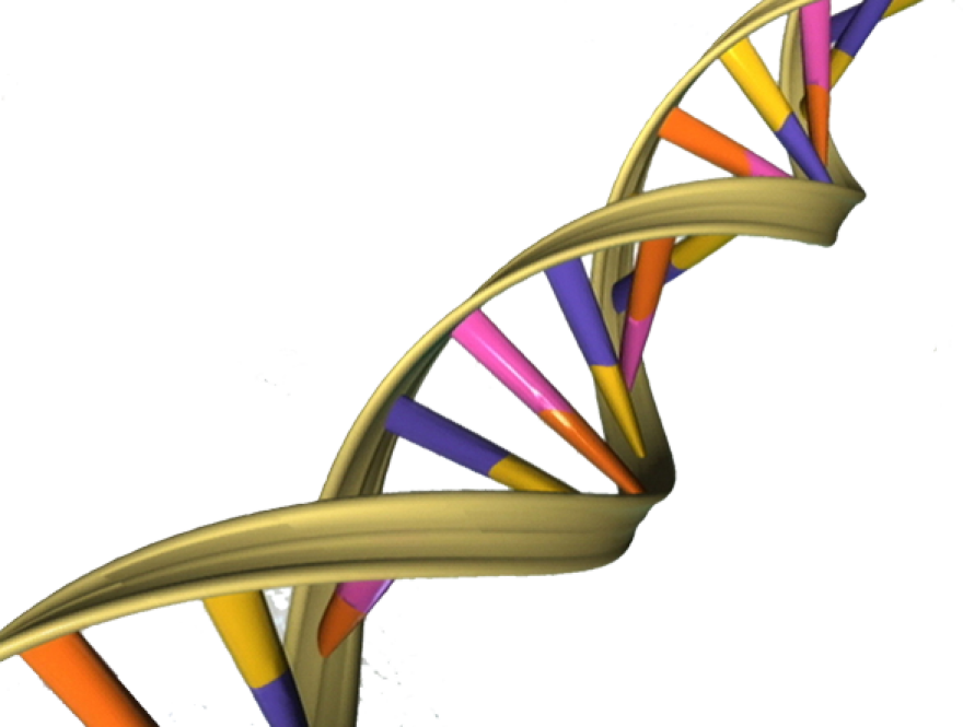 DNA_Double_Helix.png