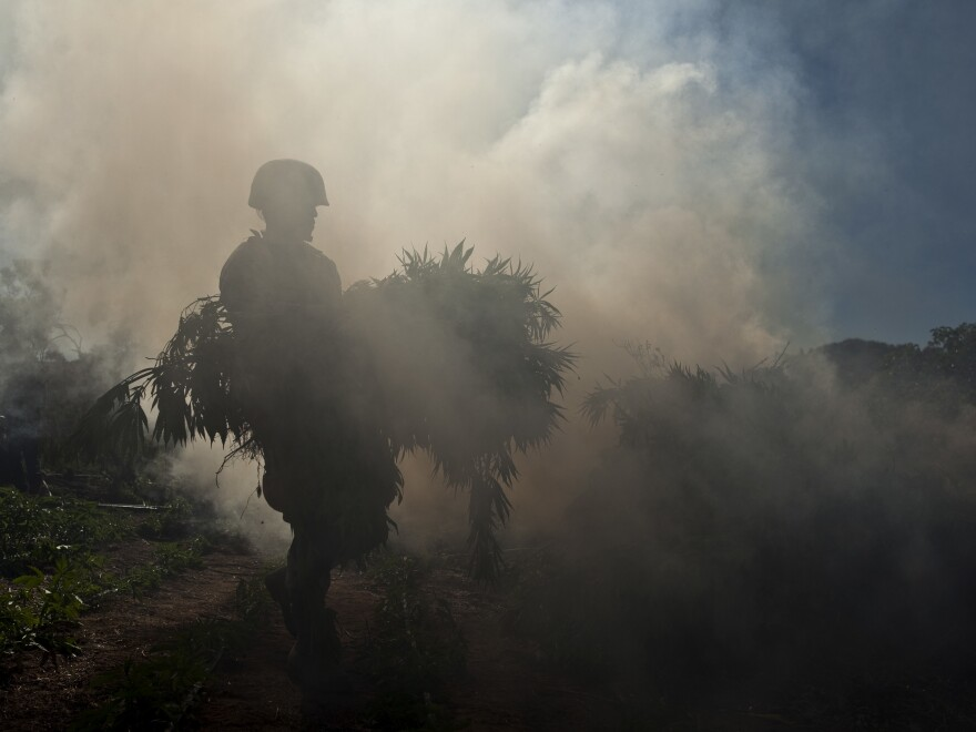A Mexican soldier walks through a cloud of smoke carrying marijuana plants to a fire at an illegal plantation at the Sierra de Juárez, in northern Mexico, in 2010. The U.S. and Mexico have long cooperated in cannabis eradication efforts.
