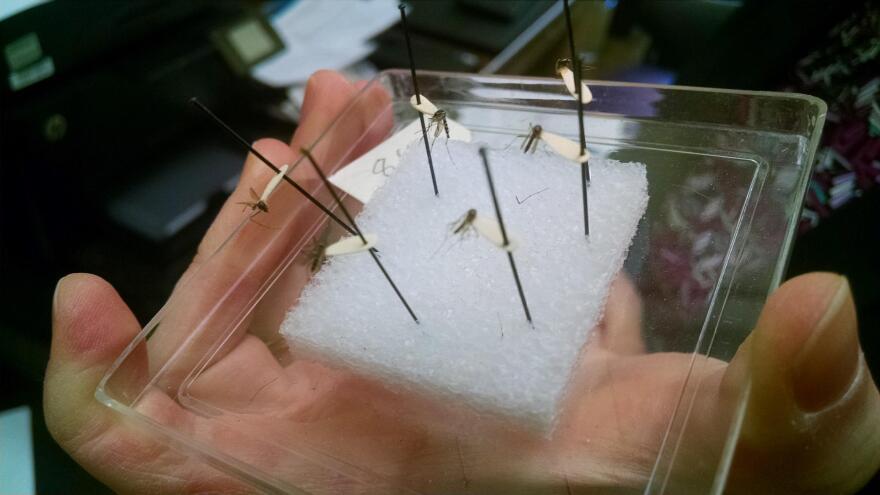 DrMcKay_Mosquito_Zika.jpg