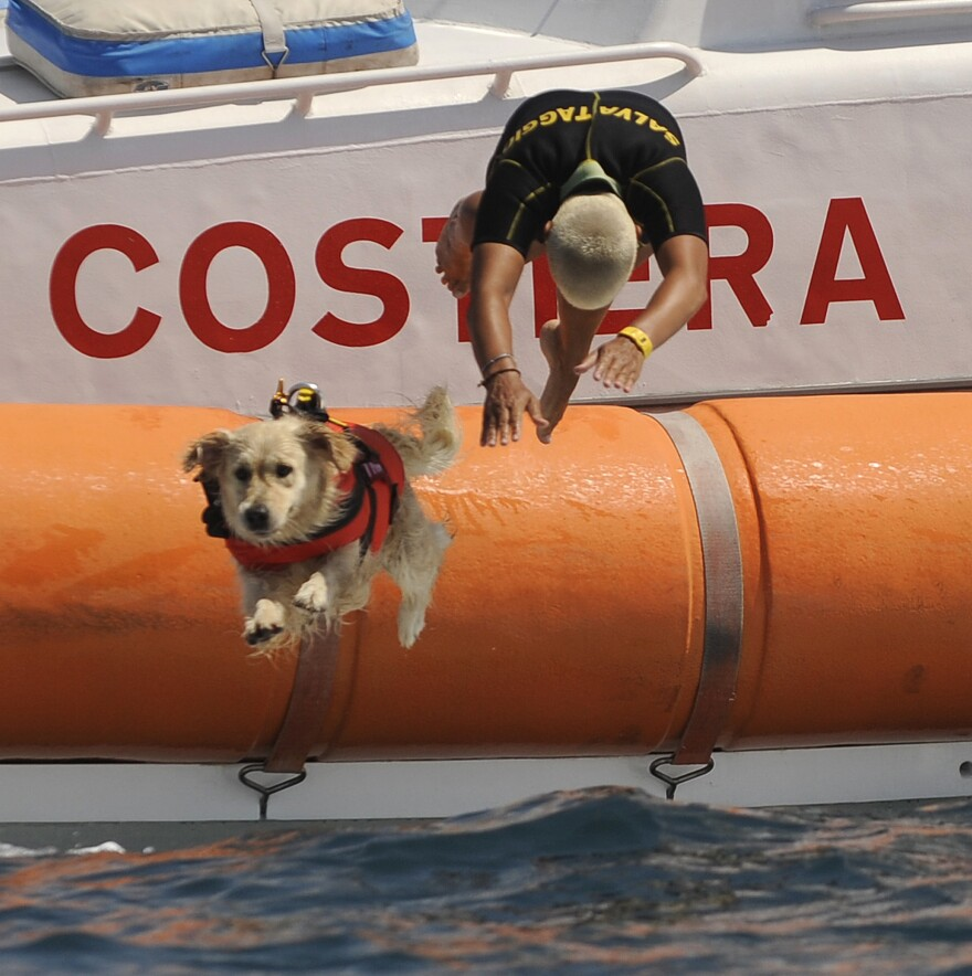 A rescue dog plunges into the sea with its instructor during a patrol at Riva dei Tarquini in the Tyrrhenian Sea north of Rome in August 2010.