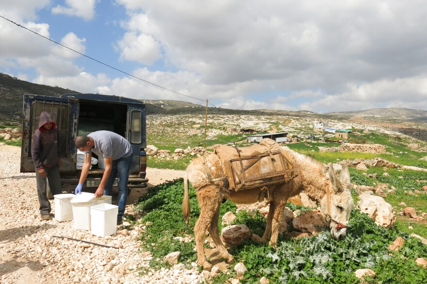 Sixteen-year-old Majid Banifadel waits while trader Sbeih Bani Jaber looks over his cheese. Banifadel brought buckets of fresh cheese from his family's herds by donkey.