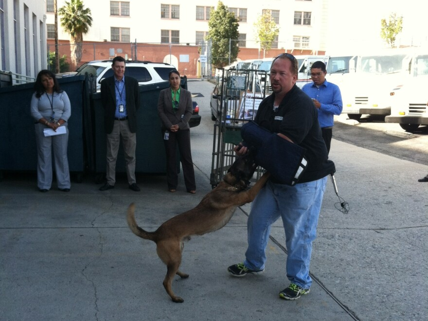 Allen Burnsworth, owner of Sit Means Sit Dog Training in Los Angeles, demonstrates how to fight off a dog attack with Flash, a trained 2-year-old Belgian Malinois.