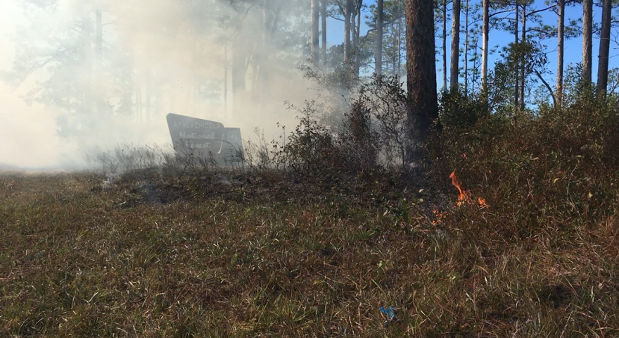 Smoke billows up from tiny flames on the ground.