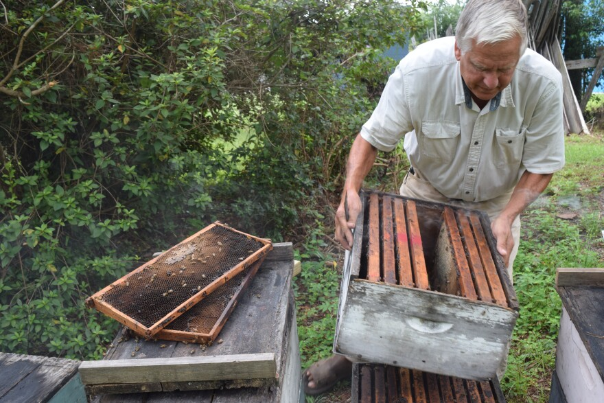 A man bends over a stack of wooden bee boxes. Green trees and grass are in the background.