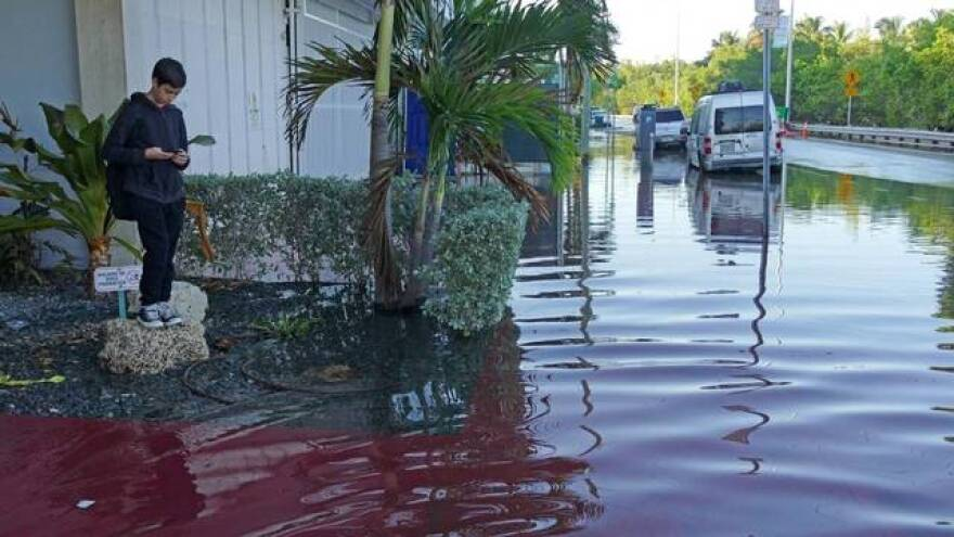 Tidal flooding in South Florida has gotten more common in recent years. That trend will continue, climate experts say.