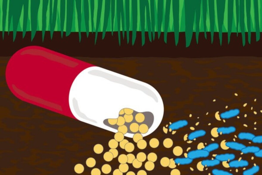 Understanding how bacteria detoxify and eat antibiotics might help us develop ways to address antibiotic contamination in the environment.
