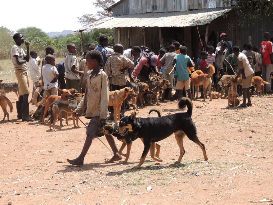 The dog parade: Vaccinating about 70 percent of dogs is enough to eliminate rabies from an area, researchers have found.