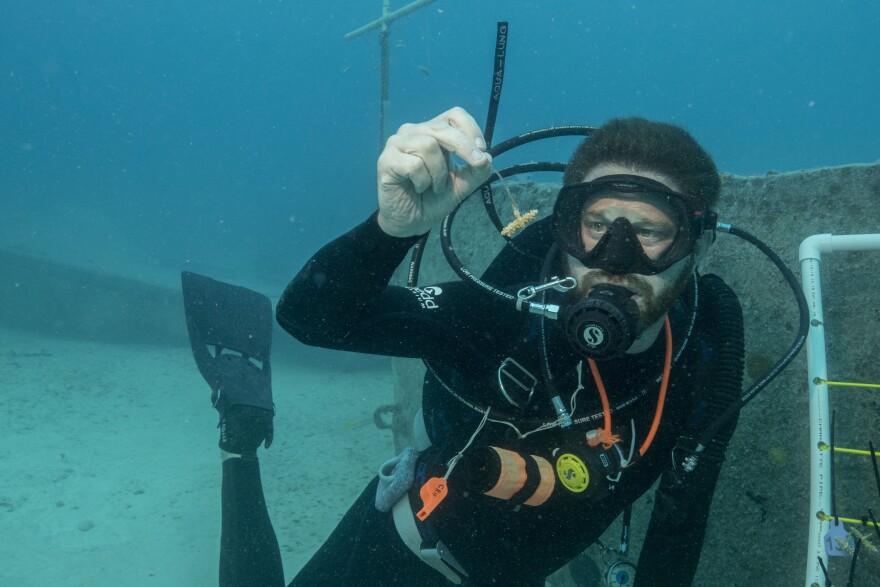 ross_holding_coral_underwater.jpg