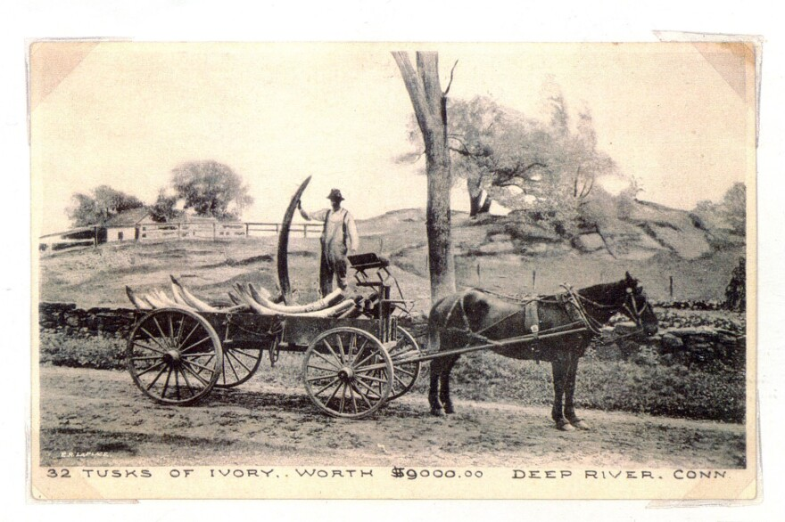 Stephen Beale drives a wagonload of ivory tusks to town from Deep River Landing. (Date unknown.)