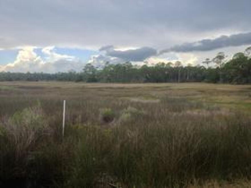 WetlandsRyanImage0715.JPG