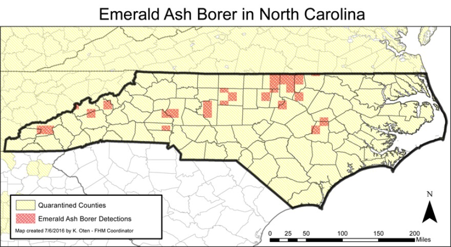 ash borer locations in NC map