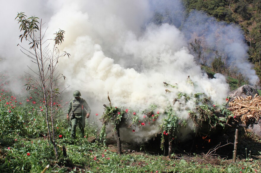 A Mexican soldier piles poppies for incineration near the town of Tlacotepec, in Guerrero state, Mexico. The army says it slashes and burns poppy when fields are too difficult to access by helicopter or when it wants to protect fruits and vegetables growing nearby.
