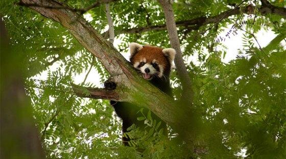 Columbus Zoo   WOSU News