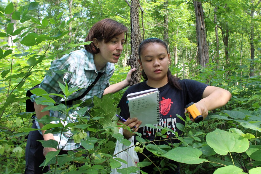 Kasey Fowler-Finn (left) watches as her graduate student Dowen Jocson uses an infrared sensor to measure the temperature of leaves at the Shaw Nature Reserve. Jocson is studying how temperature affects treehopper mating behavior.