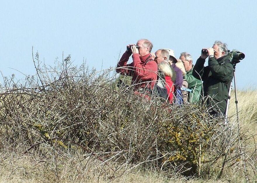 bird-Watchers-keith-evans.jpg