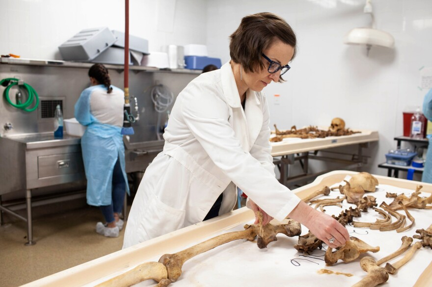 Spradley adjusts the layout of a donor's skeletal remains. The lab receives donor remains as part of a willed body program, in addition to remains for the OPID project.