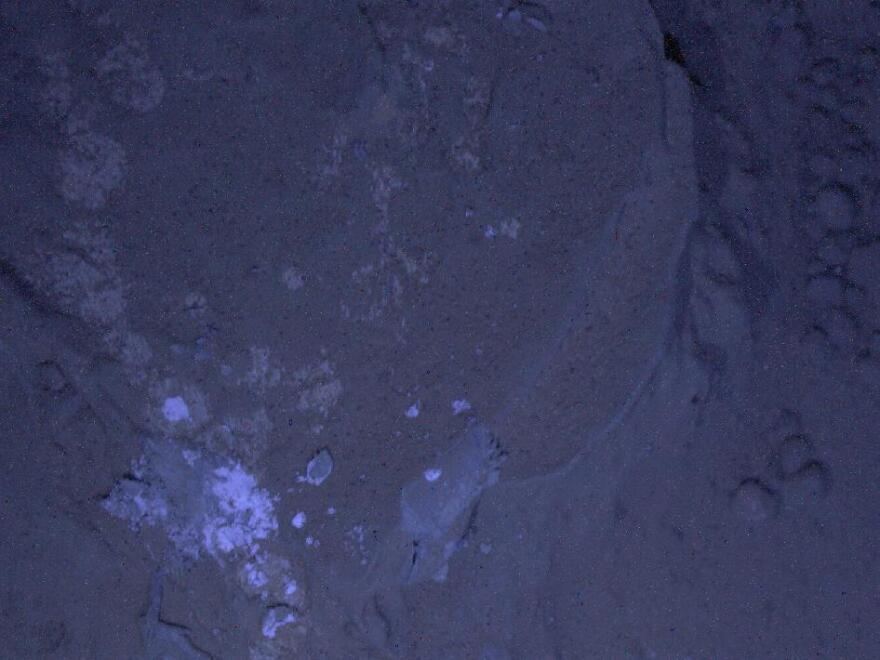 The illumination for this picture came from MAHLI's two ultraviolet LEDs. The purpose of acquiring observations under ultraviolet illumination was to look for fluorescent minerals.