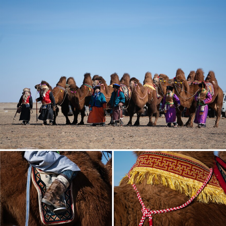The camel population in the country dropped in the mid-1990s when herders began slaughtering Bactrian camels and selling their meat to keep up with the free-market economy. The Camel Protection Association was founded to create markets for camel milk and wool and to advocate for protection of the species.