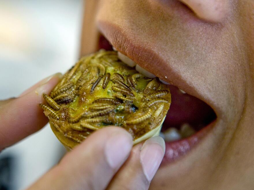 A woman takes a bite of a mealworm pie in the Hague, Netherlands.
