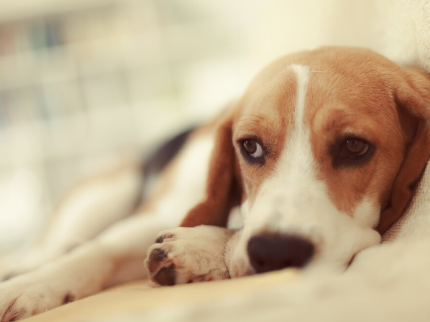 Animals can get bored, too, says Barbara J. King.