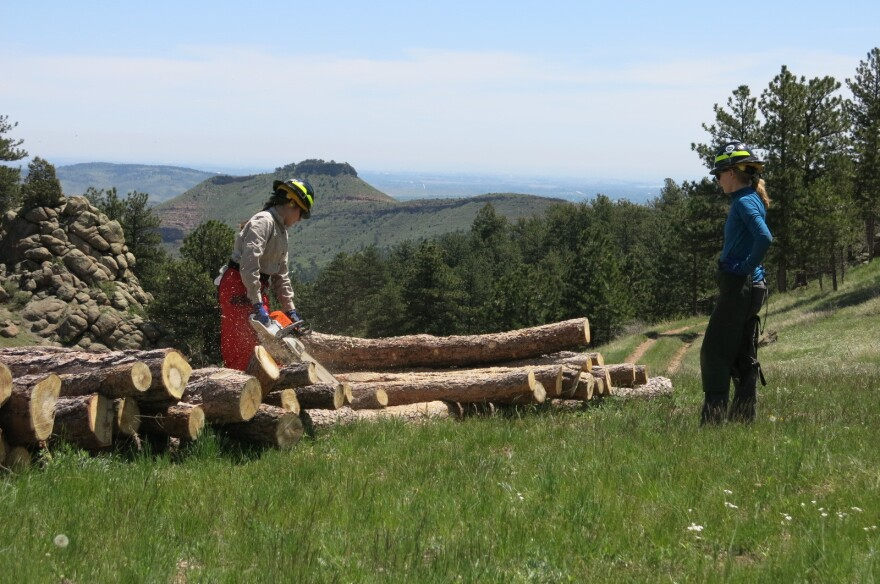 Boulder County Parks and Open Space cuts trees to thin forests, an effort to prevent wildfires from speading.  Some of the trees are sold for firewood.