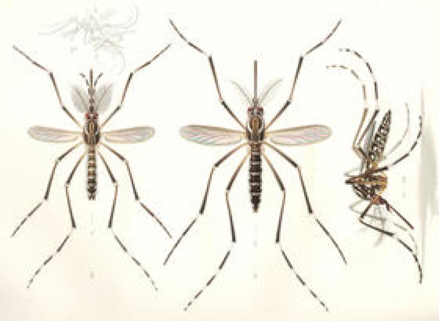 Leon County is asking the state for $469,345 to pay for emergency Zika response should there be an outbreak. The mosquito-borne virus has been linked to birth defects.