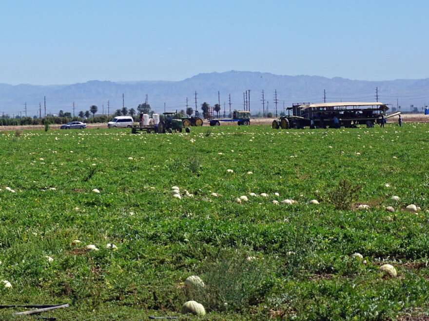 California's Imperial Valley produces around two-thirds of the country's vegetables in the winter, with water from the Colorado River.