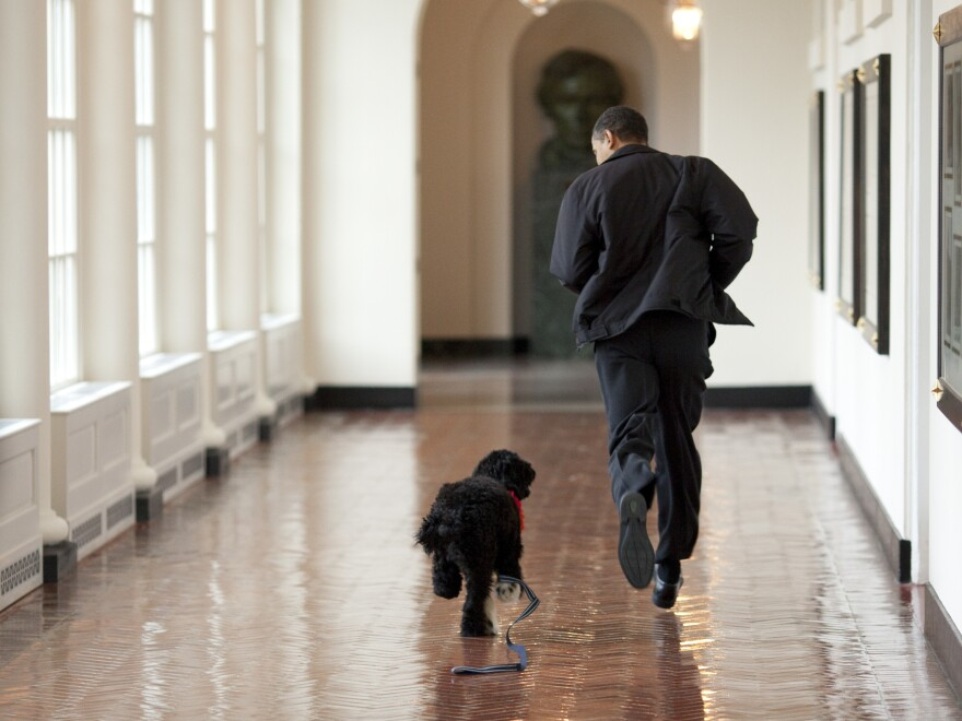 Obama runs down a corridor with Bo, the family dog.
