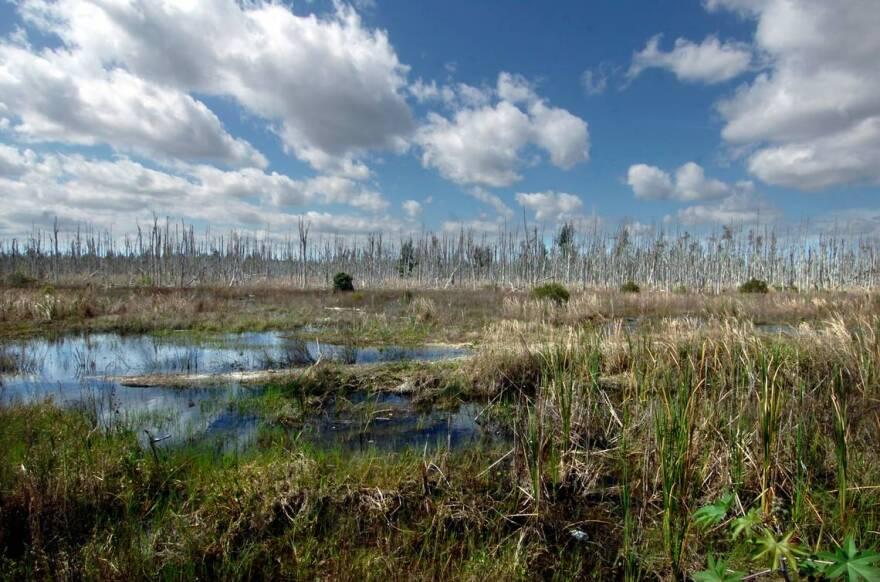 wetlands_at_tamiami_trail.jpg