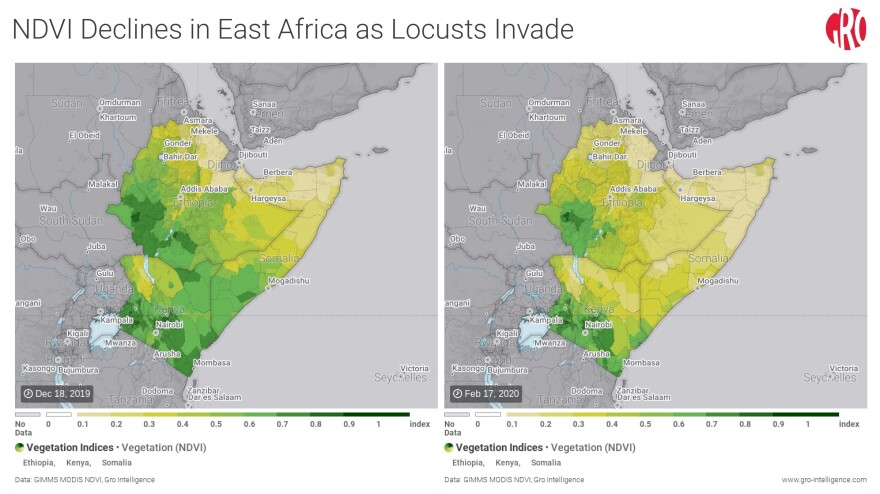 The global agriculture data analysis firm Gro Intelligence has put out maps using information gathered by satellite to show the extent to which crops in the area have been depleted between mid-December and mid-February.