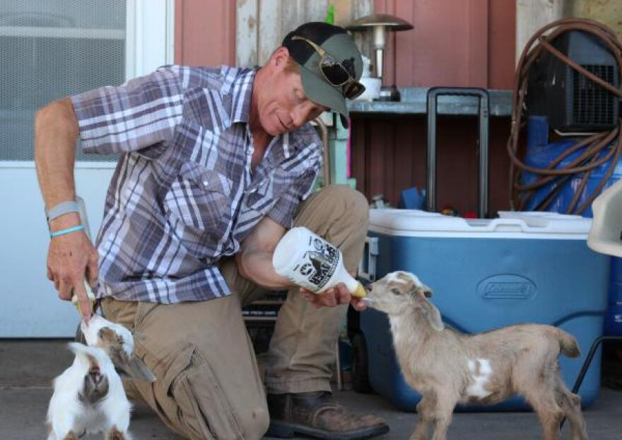 Loflin bottle-feeds baby goats, which he feeds with hemp seed from his crop. Loflin believes hemp will bring a long overdue opportunity to American farmers, though industry experts caution against too much optimism.