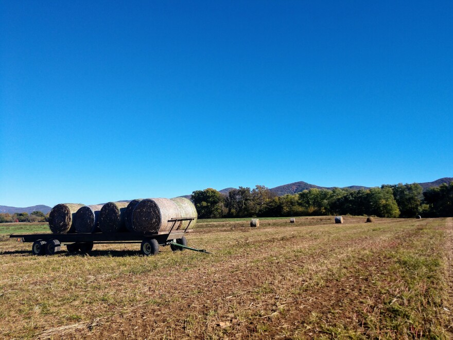 Some of farmer Glenn Rodes' hemp bales stand out against the Blue Ridge Mountains. Rodes is an eighth-generation Virginia farmer who started experimenting with hemp in 2016.