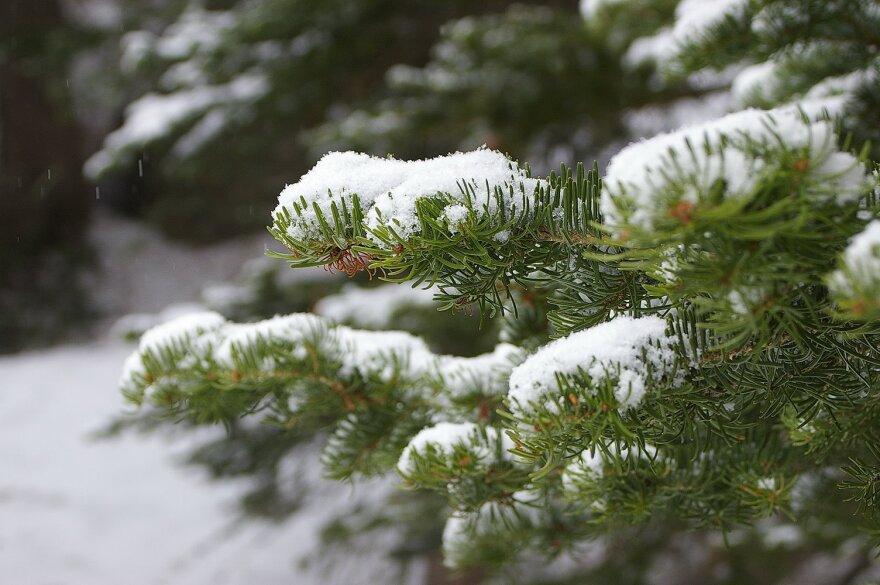 Rocky_Mountain_Snow.JPG