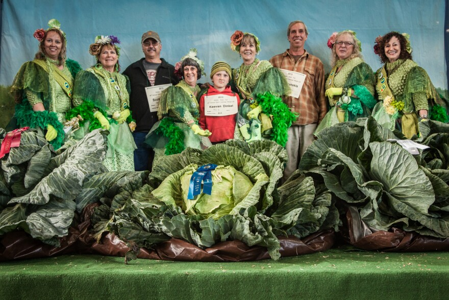 Giant Cabbage Weigh-Off 2013 winners (with placards, left to right): Scott Rob (92.1 pounds), Keevan Dinkel (92.3 pounds) and Brian Shunskis (77.4 pounds). The growers are joined by the cabbage fairies, a group of women who for 15 years have volunteered at the cabbage competition.