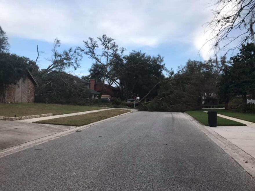 downed tree in temple terrace