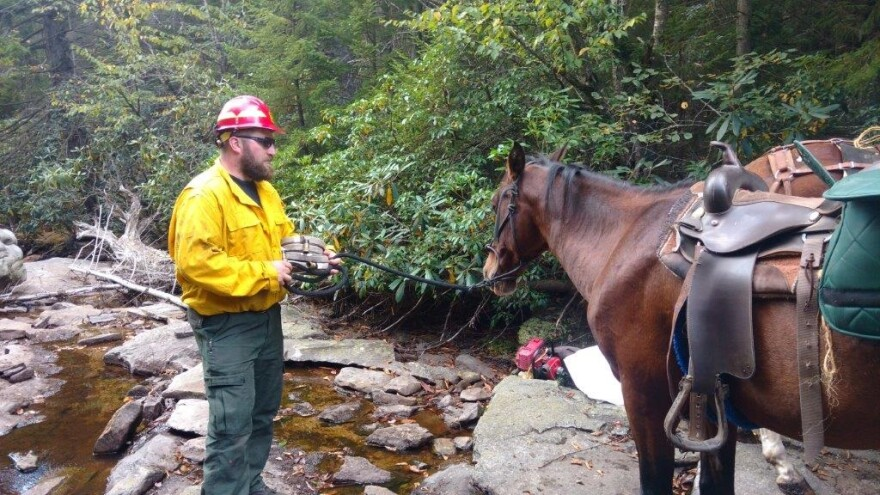 us_forest_service_with_horse_0.jpg