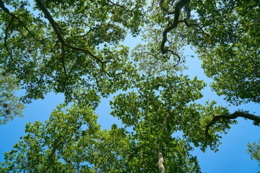 beautiful-blue-sky-branches-433144.jpg